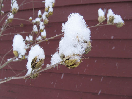 Snow-Pods